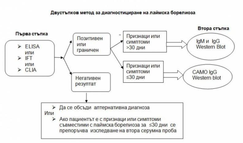 laimska_bolest